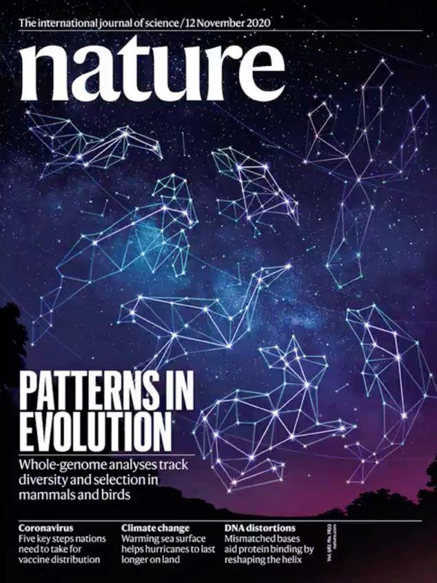 nature magazine 权威自然杂志 PDF下载 2020年11月12日刊